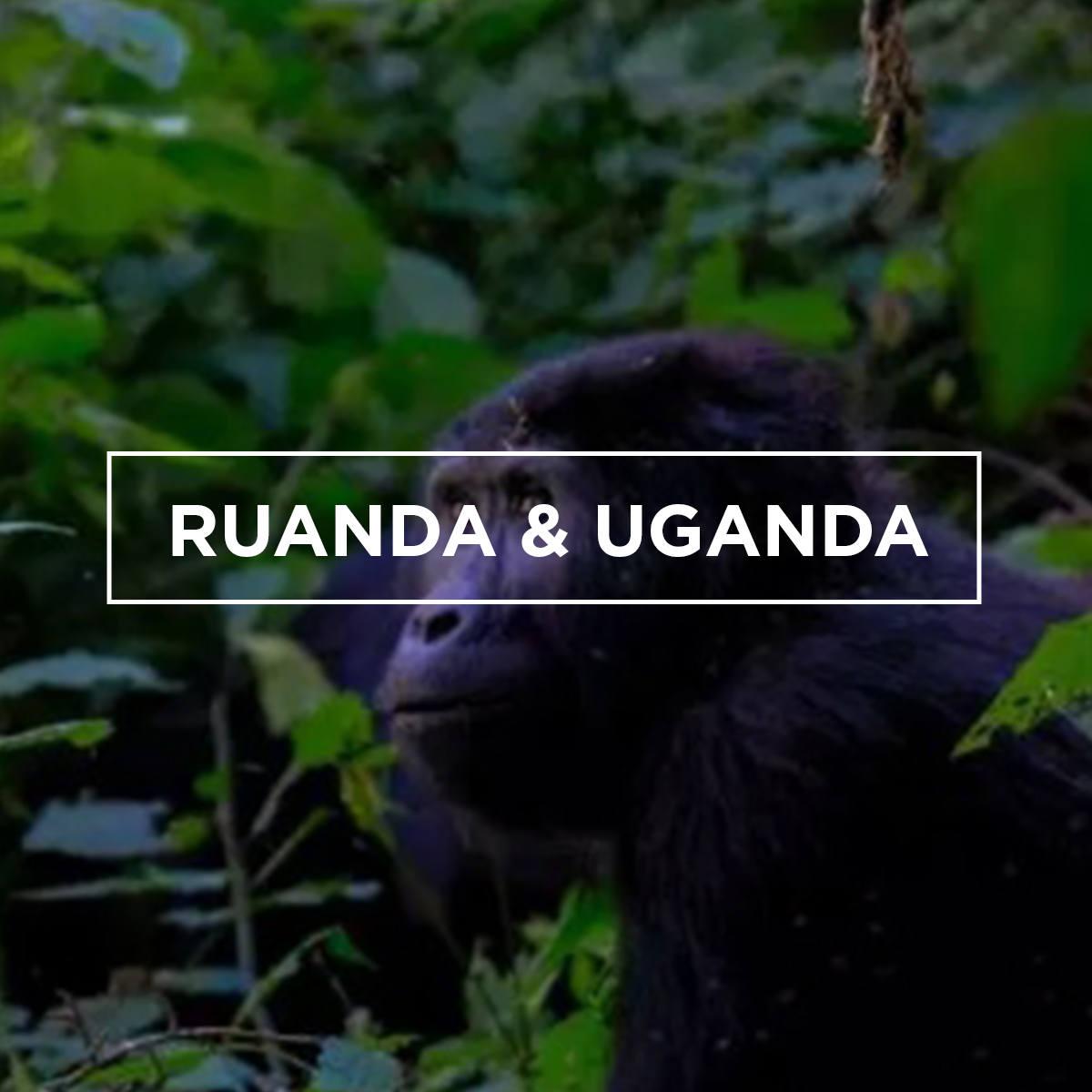 ruanda&uganda